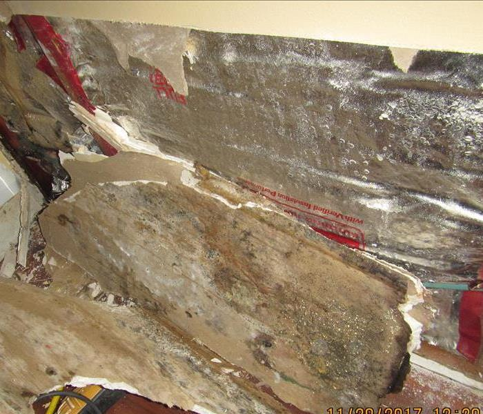 Mold Remediation Mold Clean Up and Disposal in Bellingham, WA.